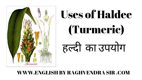 Use of Haldee (Turmeric)