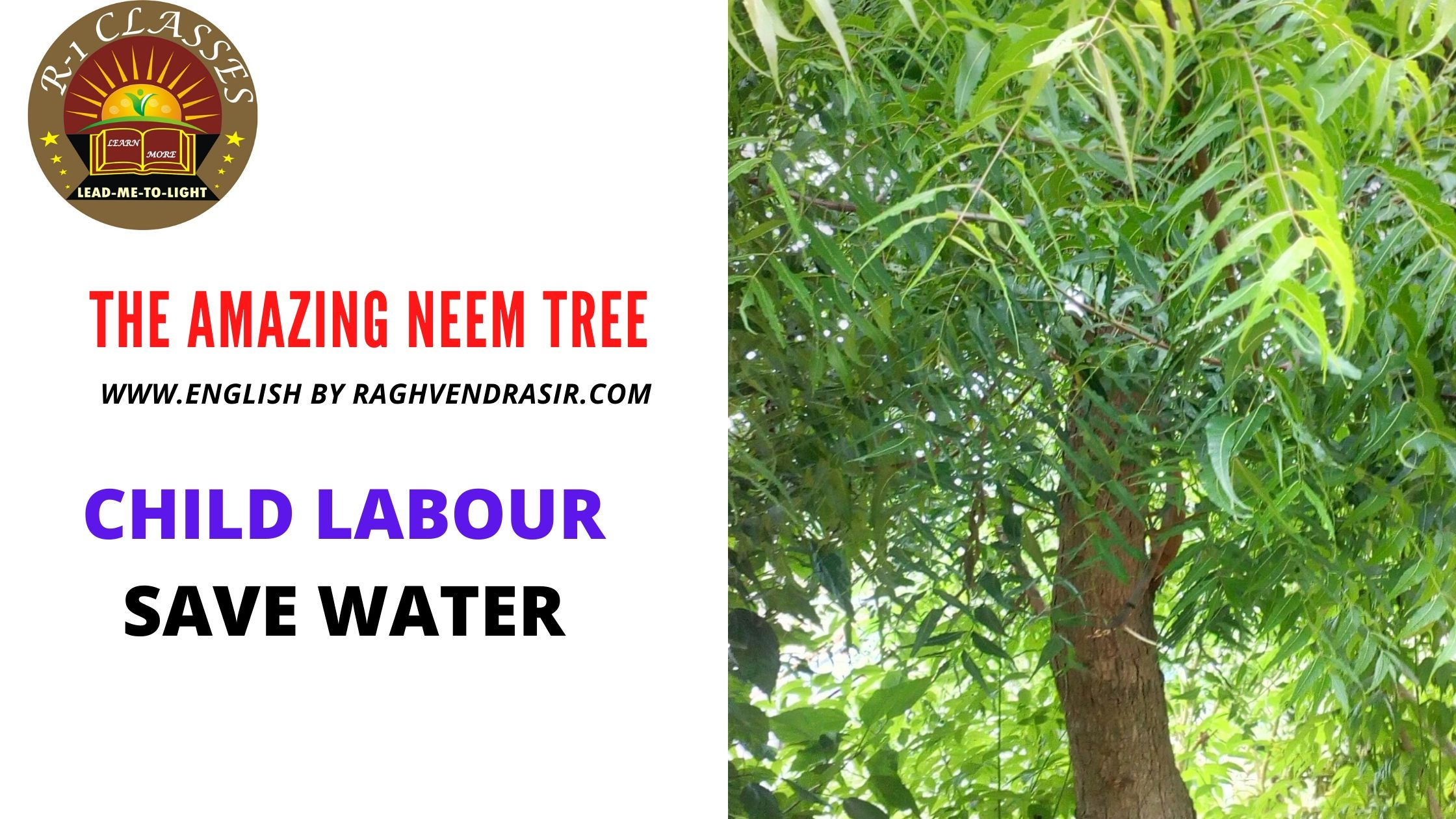 LD LABOUR SAVE WATER The Amazing Neem tree